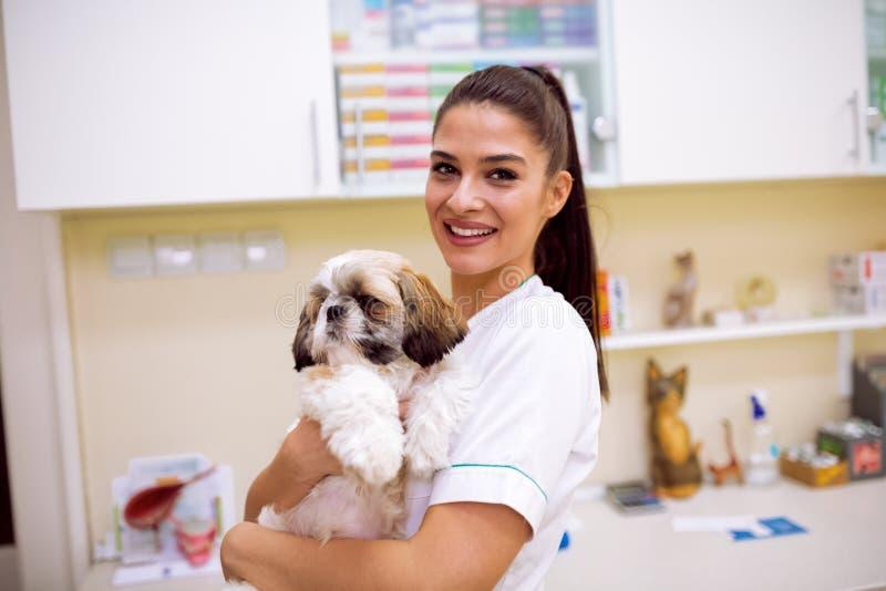 Veterinario que sostiene el pequeño perro en la ambulancia del animal doméstico foto de archivo
