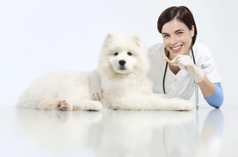 Veterinario sorridente con il cane e l'alimento, sulla tavola nella clinica del veterinario, immagini stock libere da diritti