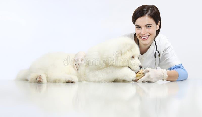 Veterinario sorridente con il cane e l'alimento, sulla tavola nella clinica del veterinario, fotografia stock libera da diritti