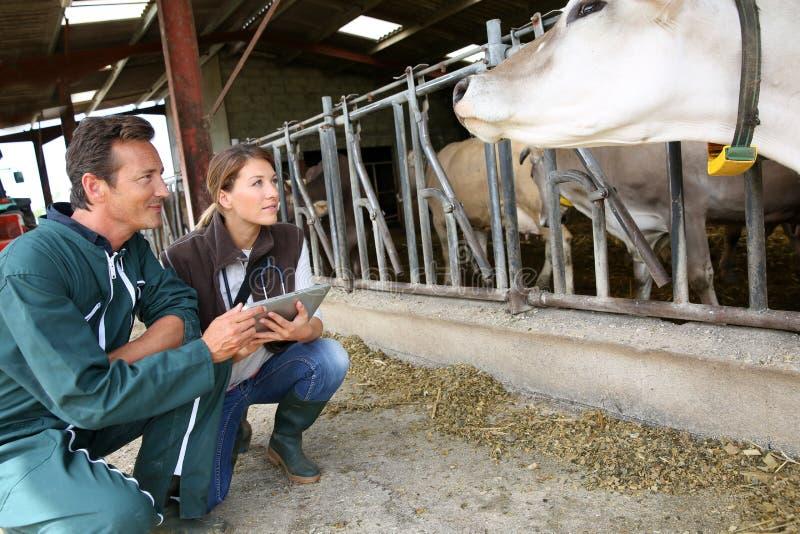Veterinario y criador que discuten la salud de los animales del campo imagenes de archivo