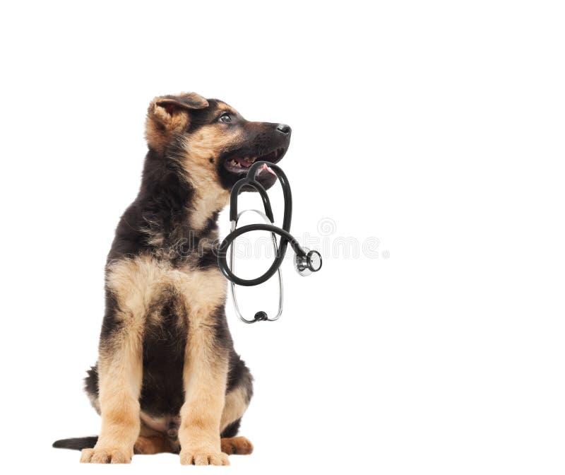 Veterinario y estetoscopio del perrito imágenes de archivo libres de regalías