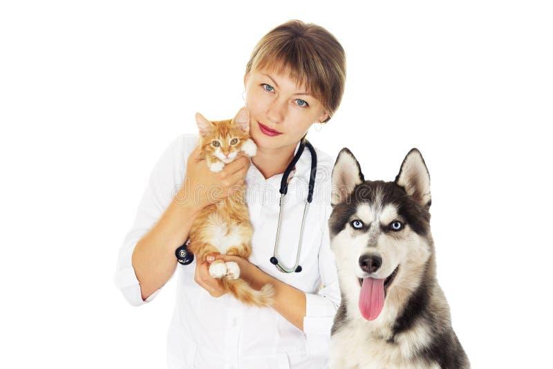 Veterinario y gatito y perro fornido fotografía de archivo libre de regalías