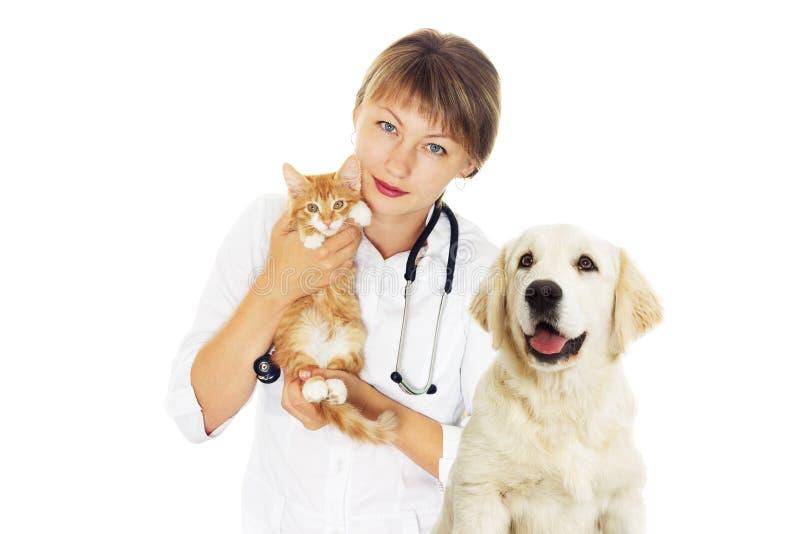 Veterinario y gatito y un perro del golden retriever fotos de archivo libres de regalías