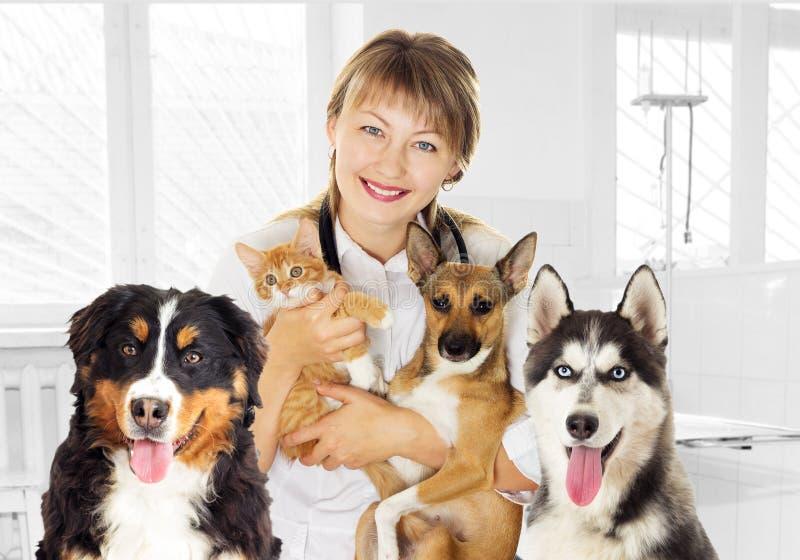 Veterinario y perrito y gatito en clínica y el Mou fornido del perro y de Bernese fotos de archivo libres de regalías
