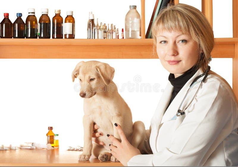 Veterinario y un perrito imágenes de archivo libres de regalías