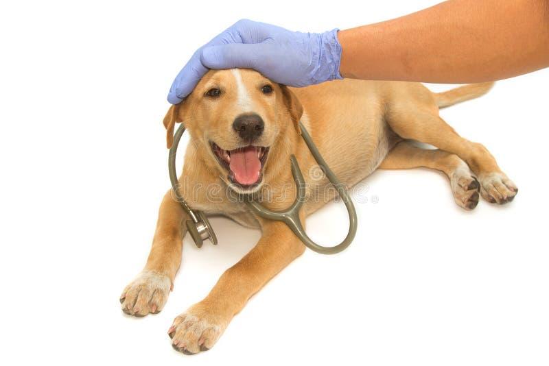 Veterinario y un perrito lindo con el estetoscopio fotografía de archivo