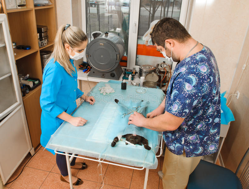 veterinarios imagen de archivo libre de regalías