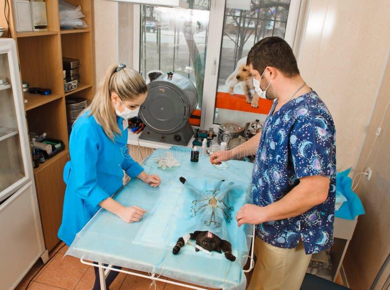 veterinarios fotografía de archivo libre de regalías
