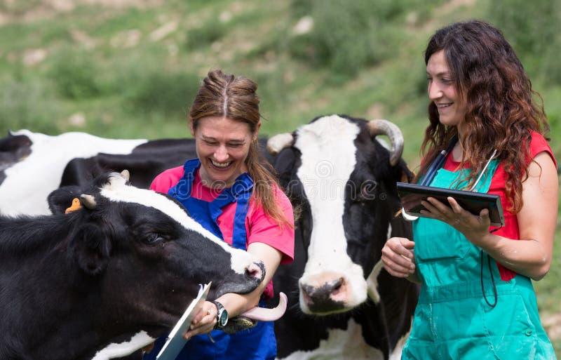 Veterinary на ферме стоковое фото rf