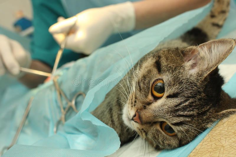 Download Veterinary stock photo. Image of banian, protective, frightful - 12028410