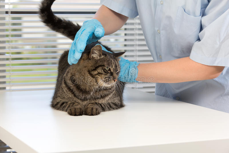 veterinary obrazy royalty free