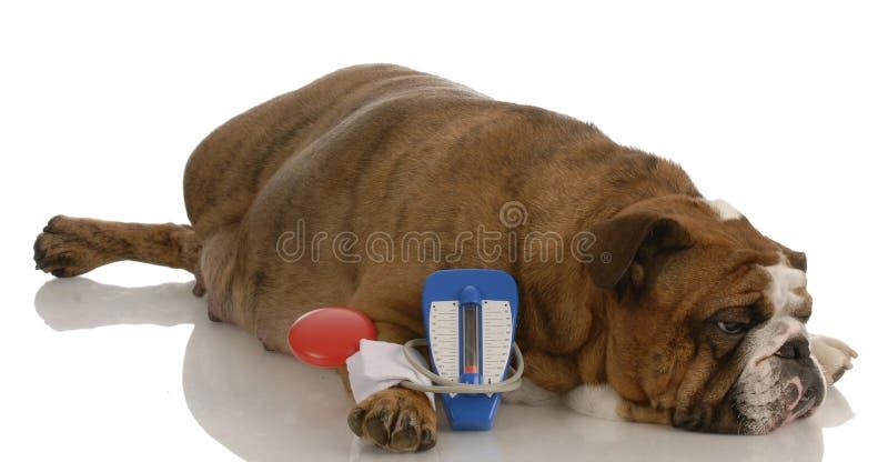 Veterinary care royalty free stock photography
