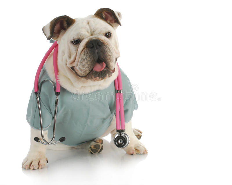 Download Veterinary care stock image. Image of happy, english - 21039169