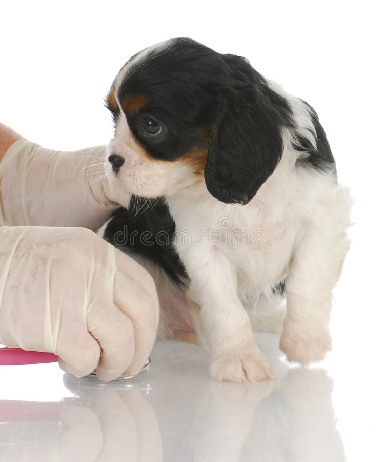 Download Veterinary care stock photo. Image of care, doctor, brown - 23237984