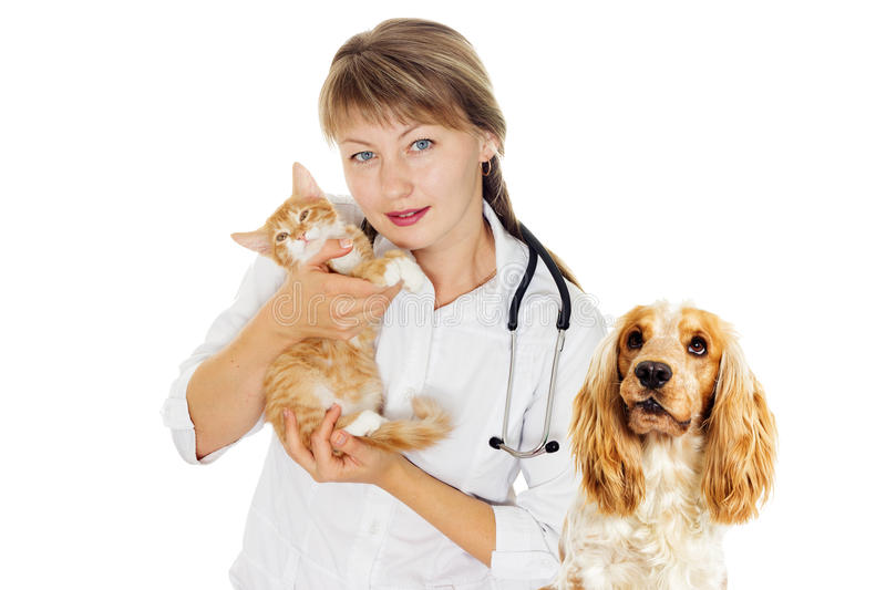 Veterinary doctor and kitten. Woman veterinary doctor and a small kitten stock photography