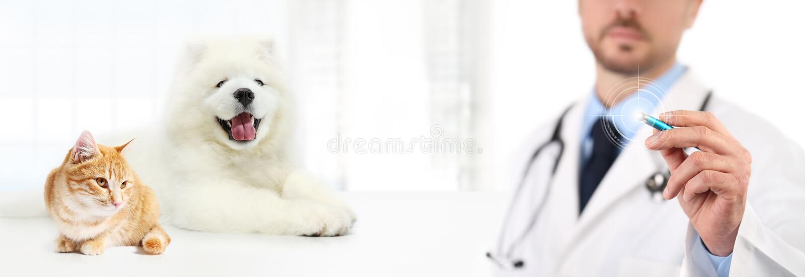 Veterinary doctor touch screen with pen dog and cat on white background. Vet clinic care concept stock photos