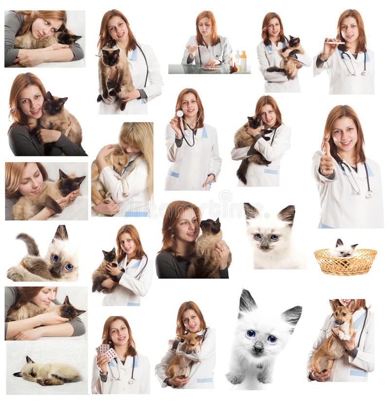 Download Veterinary doctor stock image. Image of medical, caucasian - 30244281