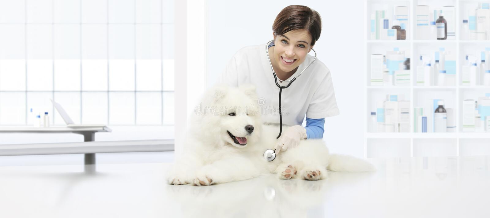 veterinary examination dog, smiling veterinarian with stethoscope on table in vet clinic stock images