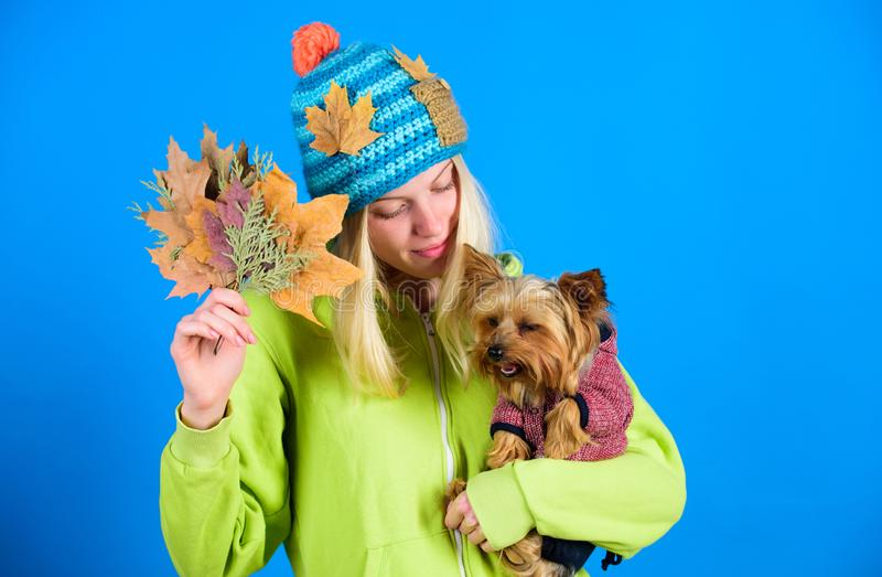 Veterinary medicine concept. Health care for dog pet. regular flea treatment. Pet health tips for autumn. Girl hug cute. Dog and hold fallen leaves. Woman carry stock photography