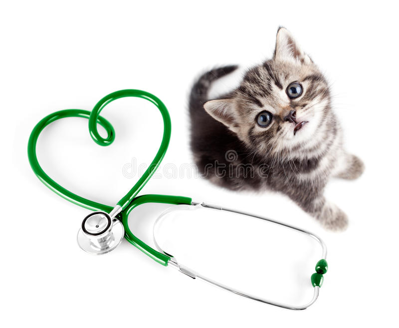 Veterinary for pets concept royalty free stock image