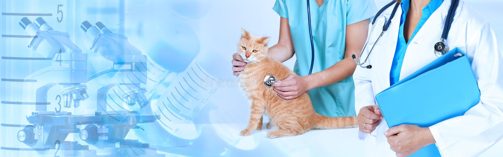 Veterinarian doctor with cat in veterinary clinic. stock images