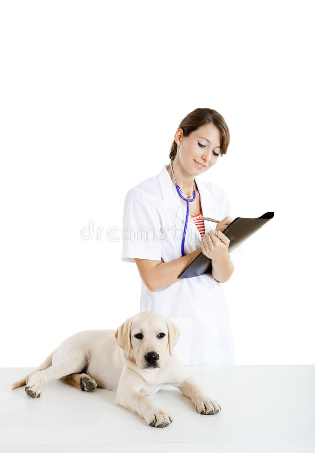 Veterinary taking care of a dog royalty free stock photos