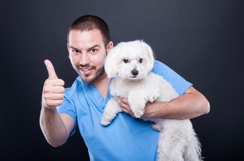 Veterinary wearing scrubs holding dog showing like royalty free stock photo