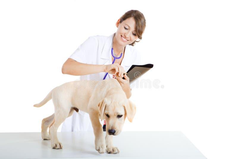 Veterinay die een hond behandelt royalty-vrije stock foto