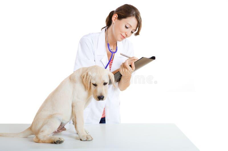 Veterinay die een hond behandelt stock foto