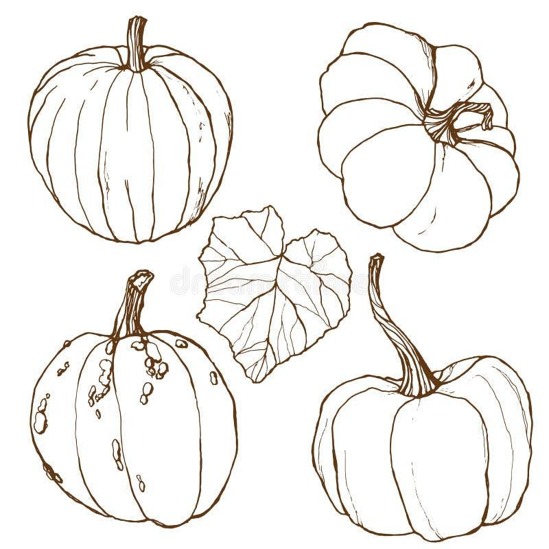 Vetor ajustado com as abóboras tradicionais pintados à mão da colheita do outono com as folhas e os ramos isolados no fundo branc ilustração royalty free