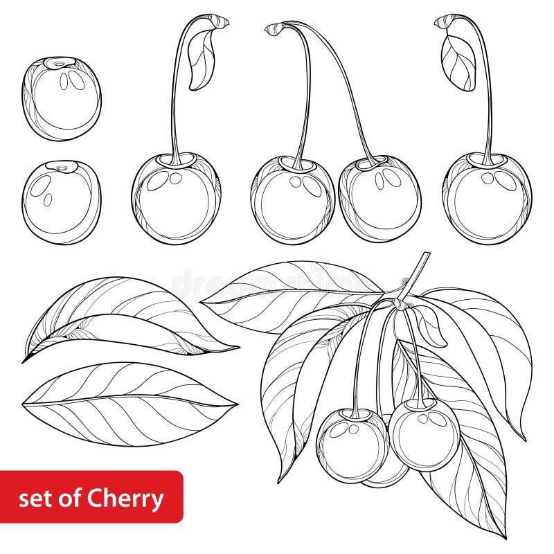 Vetor ajustado com a cereja, grupo, a baga e as folhas maduros do esboço no fundo branco Elementos florais ornamentado com cereja ilustração royalty free