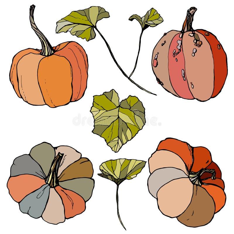 Vetor ajustado com folhas e cabaças Abóboras pintados à mão vermelhas, azuis, da laranja e da listra isoladas no fundo branco ilustração do vetor