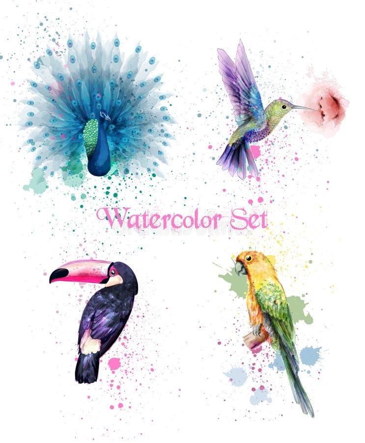 Vetor ajustado pássaros da aquarela Pavão, papagaio, pássaro do zumbido ilustração stock