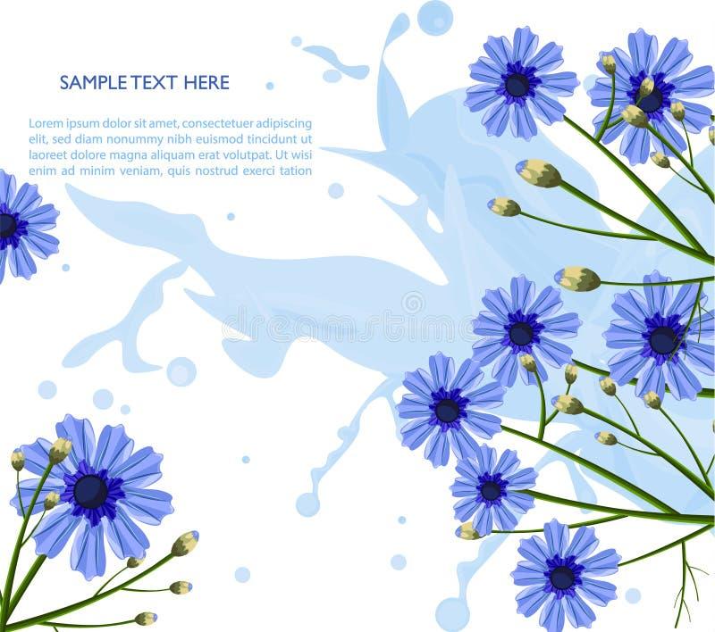 Vetor azul do teste padrão de flores da camomila Decorações florais do fundo ilustração stock