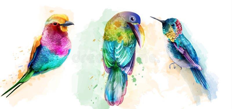 Vetor colorido da aquarela dos pássaros tropicos Papagaios bonitos, coleções ajustadas exóticas do pássaro do zumbido ilustração royalty free