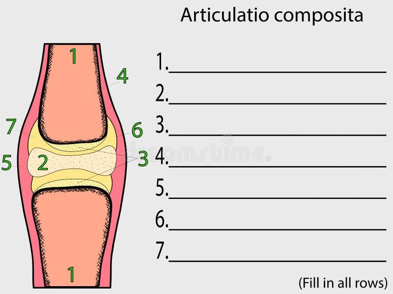 Vetor comum complexo Atlas anatômico da educação ilustração do vetor