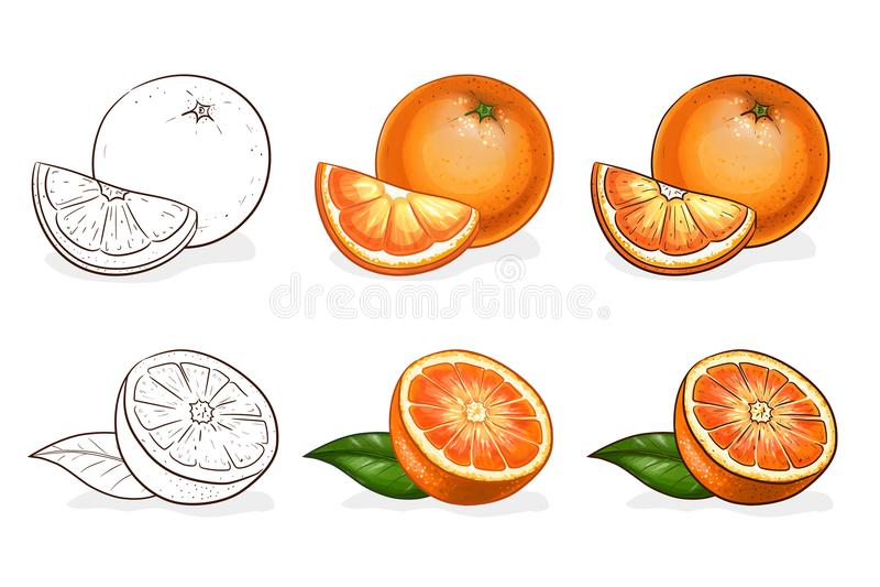 Vetor, cor e esboço, laranja saboroso ilustração royalty free