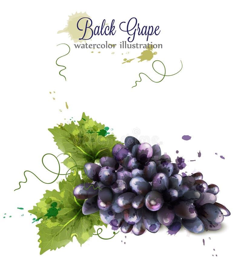 Vetor da aquarela da uva no fundo branco Moldes da colheita da queda do outono do vintage ilustração stock