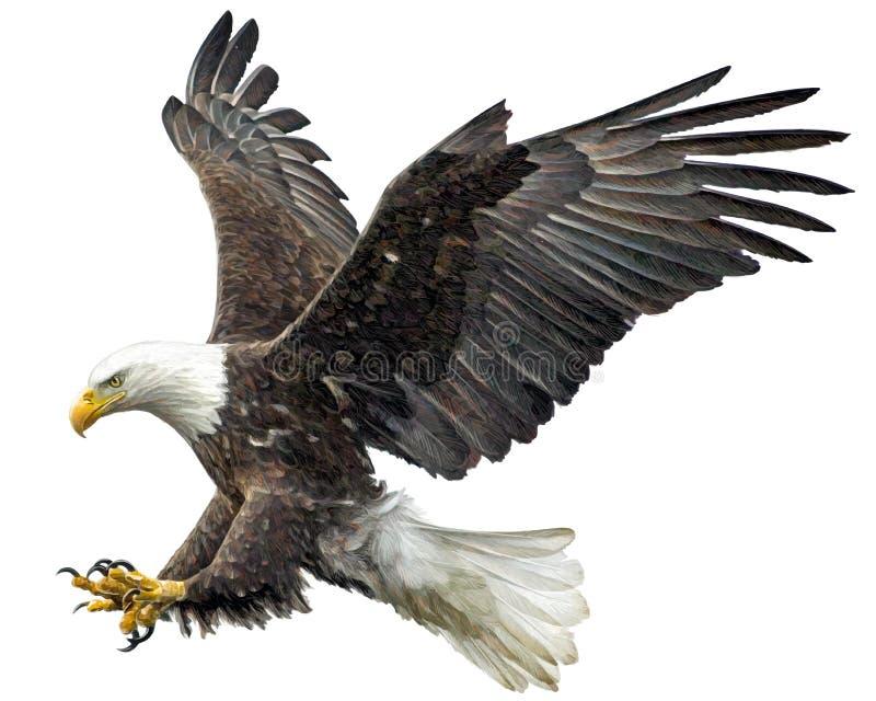 Vetor da aterrissagem da mosca da águia americana ilustração stock