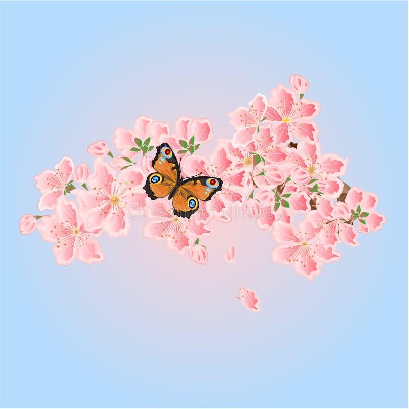 Vetor da borboleta e da mola das flores de cerejeira ilustração royalty free