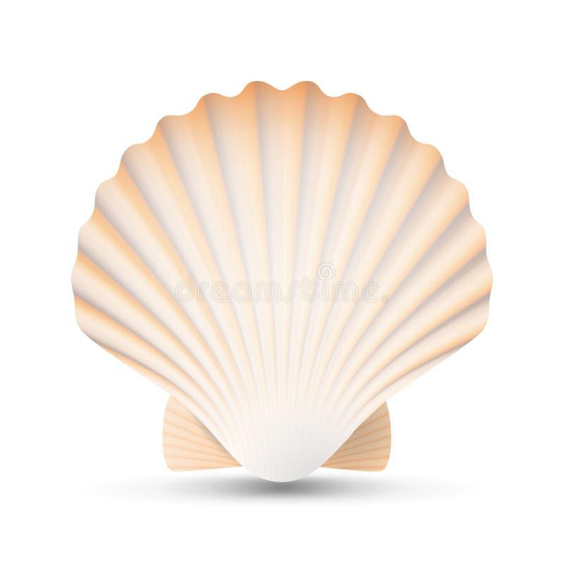 Vetor da concha do mar da vieira Ilustração exótica de Shell Isolated On White Background das vieiras da lembrança da beleza ilustração stock