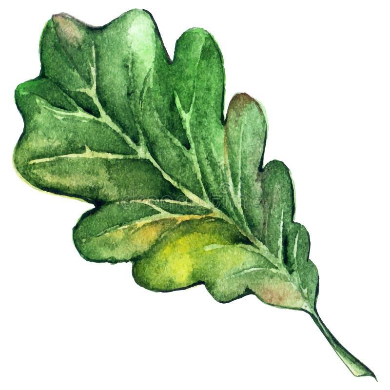 Vetor da folha do carvalho do verde da árvore de floresta da aquarela ilustração royalty free
