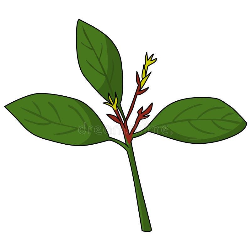 Vetor da ilustração da árvore da borracha Deixa o logotipo ilustração do vetor