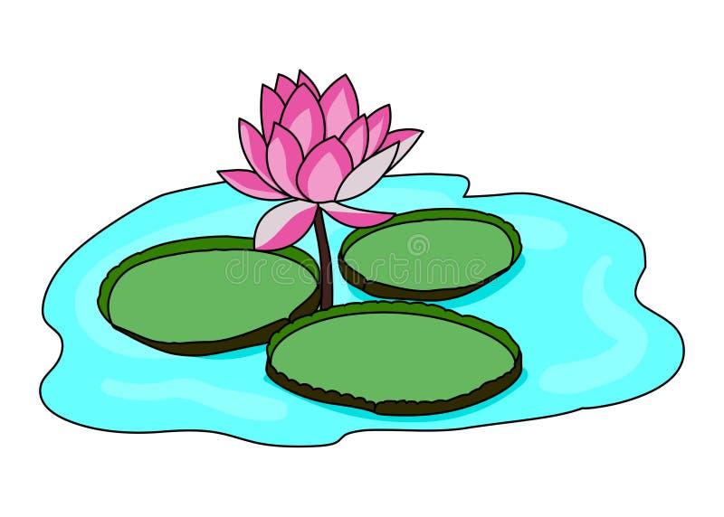 Vetor da ilustração da flor de lótus dos lírios de água ilustração royalty free
