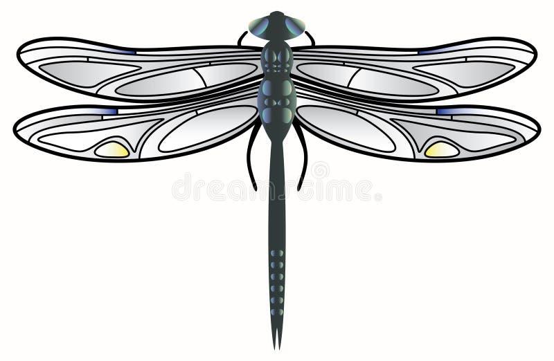 Vetor da libélula. ilustração do vetor