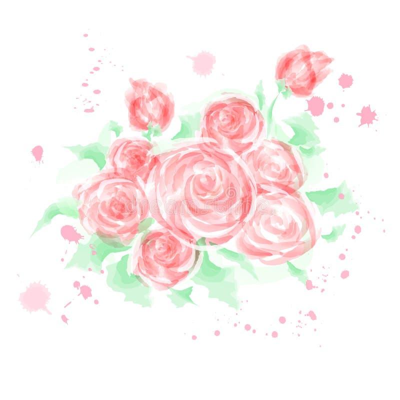 Vetor da pintura da aquarela da flor de Rosa, pintura digital ilustração stock