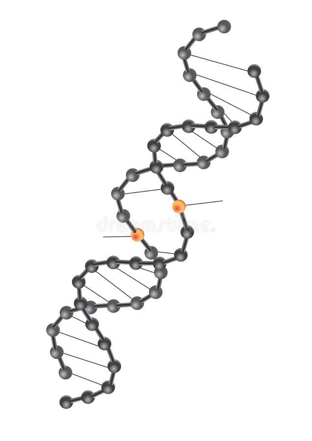 Vetor da ruptura do ADN ilustração royalty free