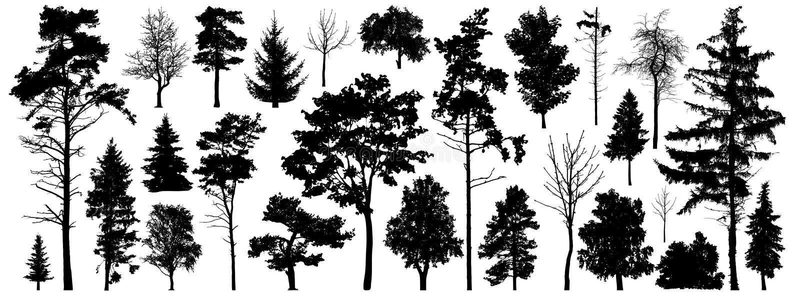 Vetor da silhueta da árvore Árvores de floresta isoladas no fundo branco ilustração stock