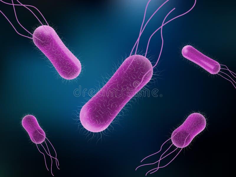 Vetor das bactérias das salmonelas para o conceito da medicina ilustração royalty free