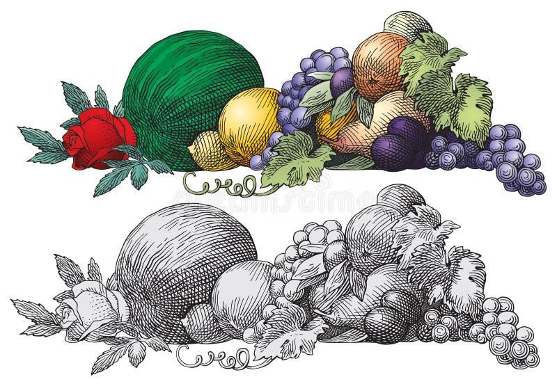 Vetor das frutas ilustração stock